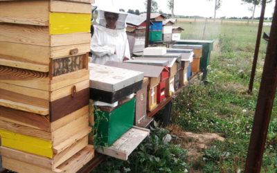 Ath : commune Maya? L'appel au secours des apiculteurs